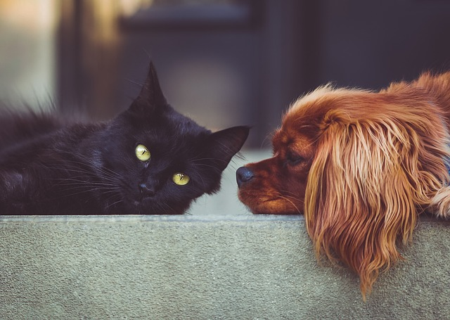 Jak jsou na tom u nás hotely pro zvířata?