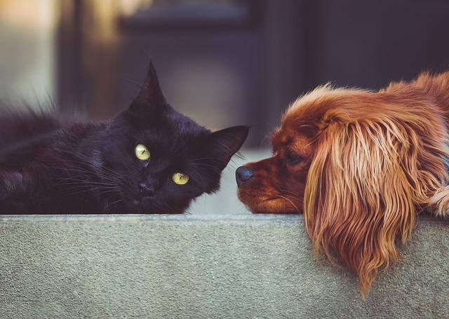 pes a černá kočka
